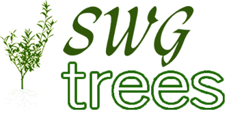 SWG Olive Trees